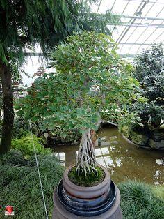 Jardin botanique de Montréal Botanical Gardens At the Exhibition Greenhouses