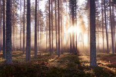 Flot tapet med dybde The Enchanted Forest - Fototapeter & Tapeter - Photowall