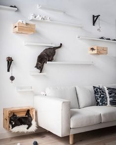 Cats Toys Ideas - Two cats hanging out on DIY cat shelves made using IKEA MOSSLANDA picture ledges at different distances and heights above a sofa - Ideal toys for small cats Diy Cat Shelves, Floating Cat Shelves, Ikea Picture Ledge, Picture Hangers, Picture Frames, Image Frames, Cat Climbing Wall, Cat Climbing Shelves, Indoor Climbing