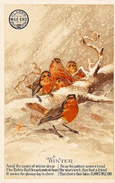 'Amid the snows of winter drear, The Robin-Red-Breast's note we hear, It seems the gloomy day to cheer...'