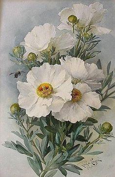 paul de longpre paintings of flowers | PRINTS ] Paul de Longpre Flowers watercolor on paper 1902 signed and ...