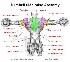dumbell side raise  Fitness motivation inspiration fitspo