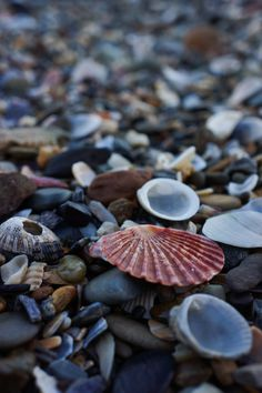 Shells on the beach. Via @Lofty_Thoughts on weheartit.