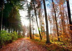 Waldwandern in der Lüneburger Heide