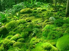 Irish Moss...20 plants for garden pathways which can handle foot traffic.  My mom had this moss and it does grow like crazy.  I love it.