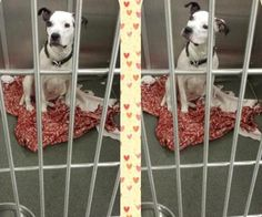 3 / 25     Petango.com – Meet Heidi, a 2 years 5 months Terrier, Pit Bull / Mix available for adoption in DUBLIN, OH Contact Information Address  PO BOX 1343, DUBLIN, OH, 43017  Phone  (614) 746-5800  Website  http://www.peaceforpawsohio.or g  Email  info@peaceforpawsohio.org