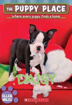 Charles is so happy to be fostering Daisy, the cutest Boston terrier. She loves being around people and even other dogs. But when Daisy is left alone, she chews things up. And Charles can't stay with her all the time. Will he be able to help this puppy find a new home?