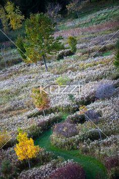 autumn trees. - Tilt image of autumn trees.