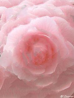 SJ Cummings : 4rd Floor - Tender Bubblegum, $1893 Science Art, Bubble Gum, Icing, Paintings, Flooring, Artwork, Work Of Art, Paint, Auguste Rodin Artwork