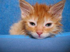 Hilarious photos of adorable wet cats who hate bath time…  http://www.pawsforreaction.com/photowetcats.html