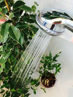 Cleaning your houseplants bring the rewards of clean air and beautiful, healthy plants Diy Home Cleaning, House Cleaning Tips, Green Cleaning, Cleaning Hacks, Limpieza Natural, Kitchen Plants, Home Staging Tips, Green Home Decor, Love Your Home