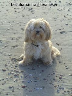 Havanna 15 years old havanese girl at nordsee / germany