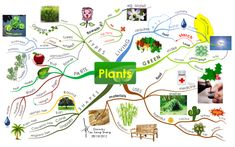 This Mind Map adheres to the primary school science syllabus in Singapore's education system. Elementary Science, Science Classroom, Science For Kids, Classroom Decor, Design Mind Map, Kreative Mindmap, Mind Map Examples, I Mind Map, Art Analysis