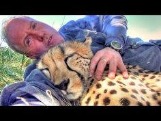 Taking A Nap With Loving Female Cheetah - Cat Cuddles & falls Asleep In Man's Arms -Needs Baby Binky - YouTube