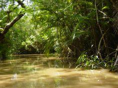 Rain Forest Unit - Amazon
