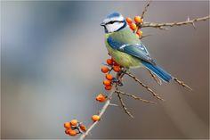 Bird Photograph by Bruno Ernecker