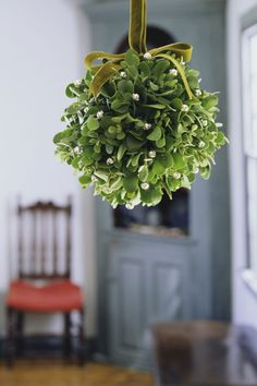 Pucker up! Mistletoe has been associated with a friendly smooch since the 18th century, with Victorians solidifying the tradition. But we all know about Christmas's association with mistletoe — turns out there's a bunch more winter plants just as festive. Click through to find out about more winter plants that will thrive in your home.