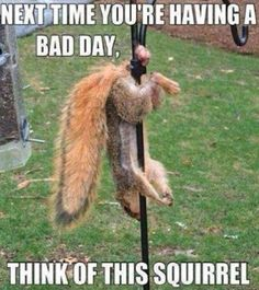 This Squirrel just made you look at the bright side of your day huh?...| #Funny #Squirrel #Pictures