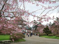 りんごの名産地だから一味違う、青森県弘前城・2600本の桜の輝き! | 青森県 | [たびねす] by Travel.jp