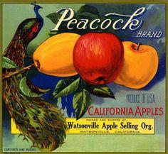 Watsonville Peacock Bird Apple Crate Label Art Print