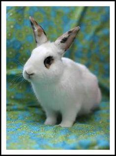 Michaiah :: #bunny #rabbit #rescue