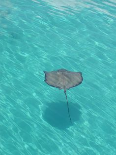 Sting Ray City, Grand Cayman  This was awesome, I got a massage by a stingray