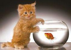 Katze mit Goldfisch im Glas