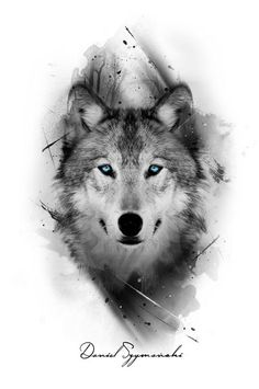 I really like the color only being in the eyes grey tattoo, wolf eye tattoo Wolf Tattoos Men, Animal Tattoos, Tattoo Wolf, Inca Tattoo, Wolf Tattoo On Back, Arrow Tattoo, Female Tattoos, Grey Tattoo, Wolf Tattoo Design