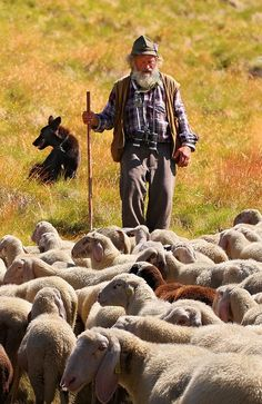 Country Living ~ Shepherd and Sheep