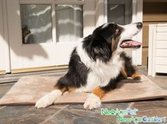 All NEW! ThermoCore Natural Heating Mat w/ Removable Cover on sale in 5 sizes @Coupaw
