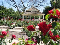 Más tamaños | Rose Garden, Cal Poly Pomona | Flickr: ¡Intercambio de fotos!