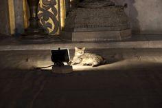 トルコの猫画像集