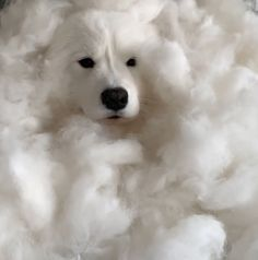 Fluffy dog accumulates a mountain of fur after being brushed