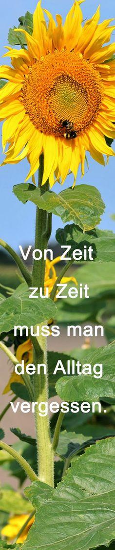 #Lesezeichen Sonnenblume #Zitat