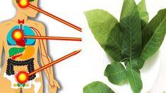 Mladé listy z ořechu královskéhomůžete úžasně využít pro vaše zdraví.Nemusíte čekat, dokud dozrají plody – perfektně můžete zužitkovat i tyto zelené listy.Mají ohromné výhody pro vaše zdraví – nejjednodušší je připravit si z nich čaj, zápar, a nebo si je jednoduše přidat do koupele. Co dokáže ořechový list Je výborným lékemna žaludek, zlepšuje trávení, čistí […] Remedies, Tableware, Relax, Plants, Dinnerware, Home Remedies, Tablewares, Plant, Dishes