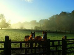 I want to ride horses again!