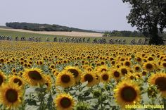 2015 Tour de France Live Video, Route, Preview, Results, Photos, TV, Startlist