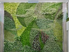 The rigid waterproof eco-panels are made from post consumer food grade plastic (such as milk jugs, plastic bags, soda pop bottles, etc) and the moss mimicking rooting material is made from recycled fibres from the textile industry.