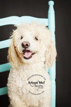 05/19/14 Salty Poodle • Adult • Male • Medium Special Pals Animal Shelter Houston, TX Still Listed  12-7-14