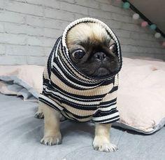 So cute! #pug