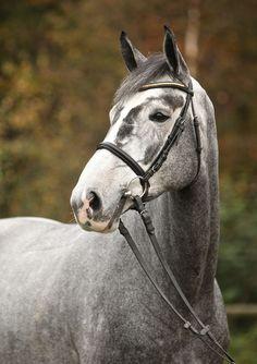 San Rina, Mare - German Horse Center