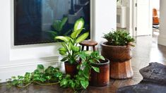 "Plants add another dimension to interiors: ""The different tones of greens, the shapes of the leaves, the fall of the ..."