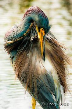 Gentle Repose, Viera Wetlands from © gwjones . photographic imaging