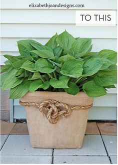 How to Turn an Old Laundry Basket into a New Big Planter