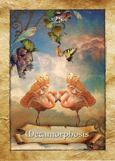 "The Enchanted Map Oracle Cards by Colette Baron-Reid:  Metamorphosis - ""You are in the process of deep and beautiful change."""
