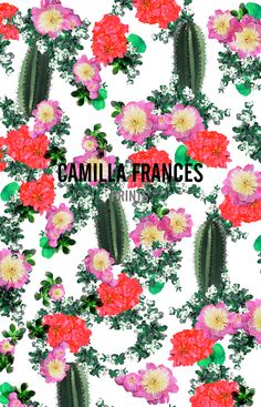 Camilla Frances on Curiosity is Calling