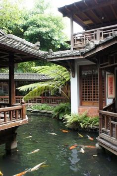 Japanese pond with koi carp