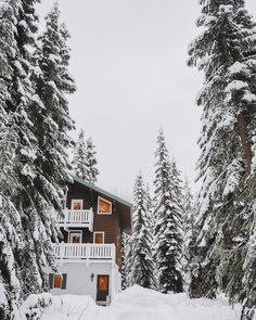 The longer I'm in school, the more I think I just want to be an author and live in a cabin surrounded by snow