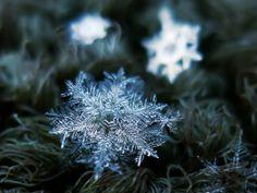 Flipantes las fotografías de copos de nieve de Alexey Kljatov http://chaoticmind75.blogspot.ru/2013/08/my-technique-for-snowflakes-shooting.html
