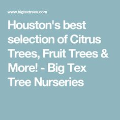 Houston S Best Selection Of Citrus Trees Fruit More Tex Tree